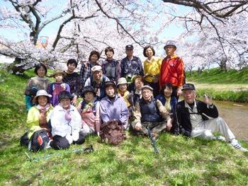 2013.4.5 退職者会の皆さんとお花見ウォーク